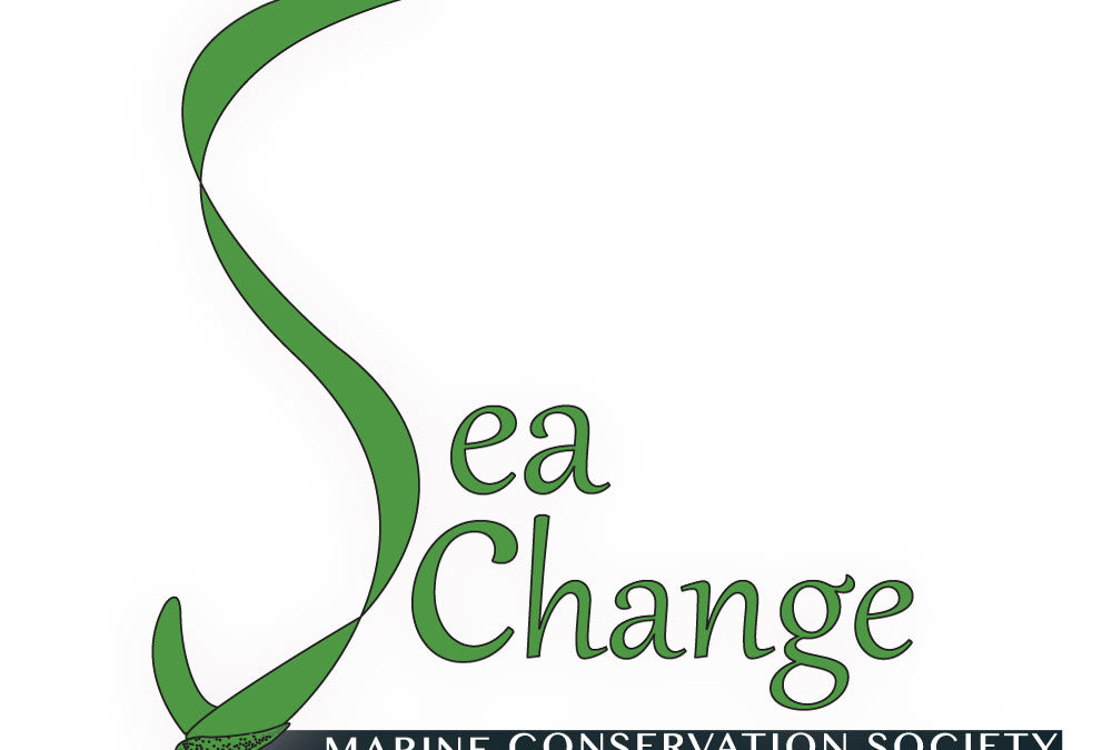 Welcome to SeaChange's New Website!